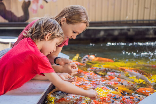 Mom and son feed koi fish. Beautiful koi fish swimming in the pond