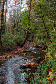 Evergreens and Stream