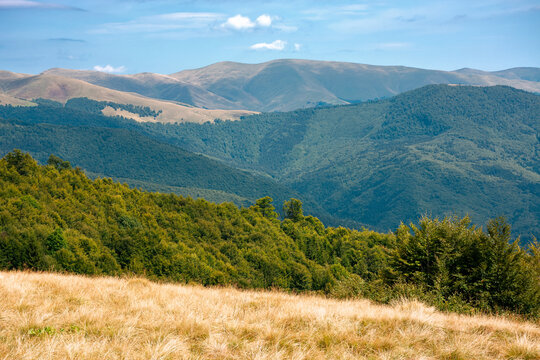 summer mountain landscape with forest on the hill. primeval beech trees on a grassy slopes of svydovets ridge. beautiful nature scenery of carpathians on a sunny day with clouds on the sky
