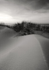 Wydma na wybrzeżu Morza Bałtyckiego