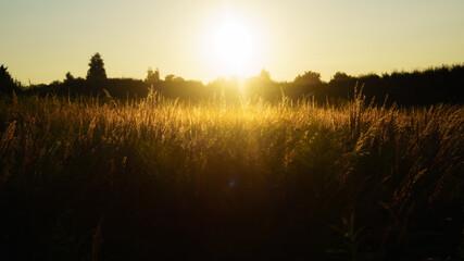 Obraz zachód nad łąką - fototapety do salonu
