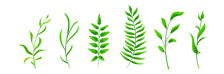 set of collection natural leaves green forest isolated on white background