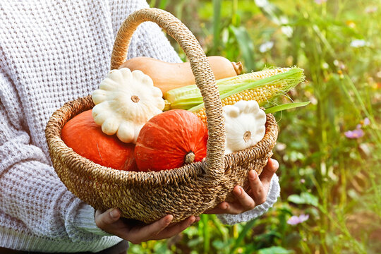 Woman holding basket with ripe vegetables and pumpkins from autumn garden on outdoor. Fall autumn concept. Harvest festival. Greeting card or banner for sales. Selective focus