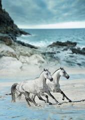 Obraz dwa białe konie biegnące galopem po plaży - fototapety do salonu