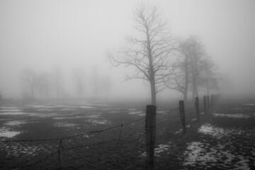 Drzewa na zamglonym polu w zimowe popołudnie