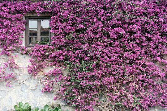 28 / 5000 Resultados de traducción Facade with flowers and window