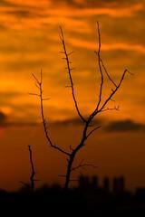 Samotny martwy krzew
