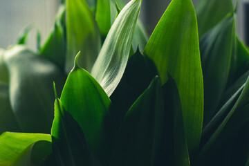 Obraz zielono mi - fototapety do salonu