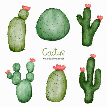 Watercolor catus toy object asset. Baby toy stuffs set of cactus plant
