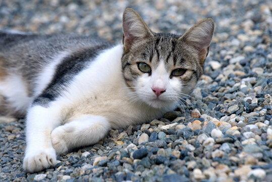 Aufmerksames, getigertes Kätzchen
