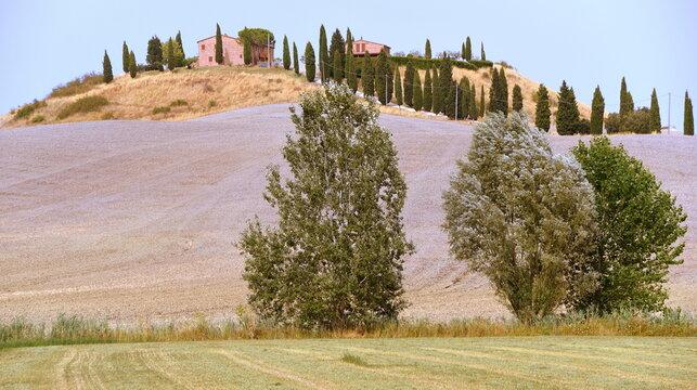 Liebliche Landschaft der Crete Senesi mit Zypressenallee und Bäumen im Vordergrund