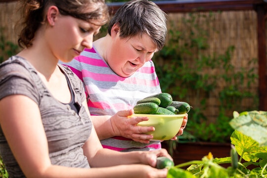 mentally handicapped woman and a caregiver harvesting cucumbers from a raised bed