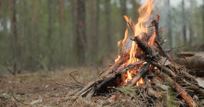 Small burning fire in the forest in cloudy weather. Low angle shot of the fire in the forest. Burning fire of small logs on an autumn evening..