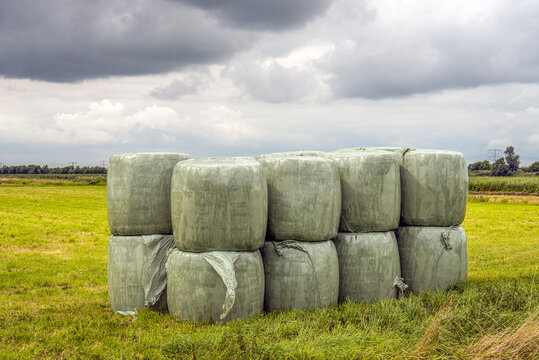 Rolled up dried grass wrapped in green plastic wrap and stacked at the edge of freshly cut grassland. The photo was taken in the Dutch province of North Brabant on a cloudy summer day.