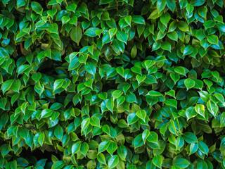 Closeup of beautiful lush greenery on a warm summer day