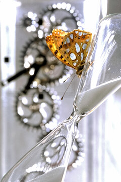 Butterfly is on Hourglass against Time Cogs Gears  Background. Concept of time is elusive