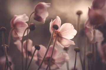 Zawilce japońskie - Anemony