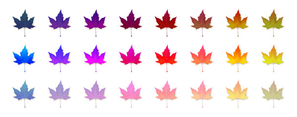 Set of vivid maple leaves of unusual, neon colors. Design collection. Seasonal autumn abstraction