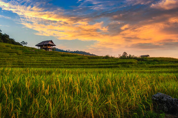 Beautiful Sunset on terraced rice field in harvest season in Chiang Mai, Thailand.
