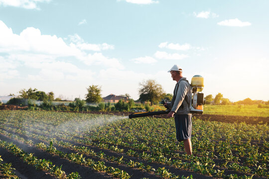 Farmer sprays pesticides on plantation. Use of chemicals for protection of plants from insects and fungal infections. Farm work on field. Pesticides and fungicides. Agriculture and agro industry.