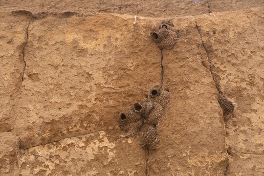 Swallow nests at Petroglyph Point, Lava Beds NM