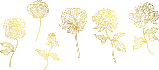 Obraz Rose flowers and leaves. Isolated on white. Hand drawn line vector illustration. Eps 10 - fototapety do salonu