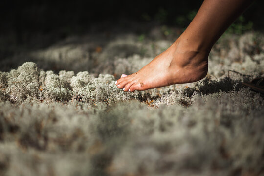 Female foot at forest reindeer moss. Harmony with nature concept