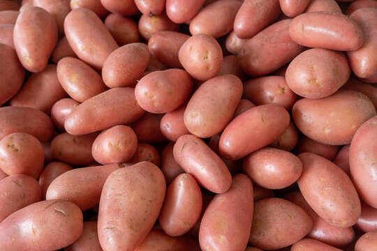 Fresh young red potatoes for sale at city farmers market
