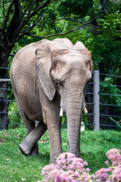 elephant in the park