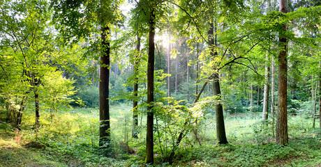 Tło z lasem w okresie lata
