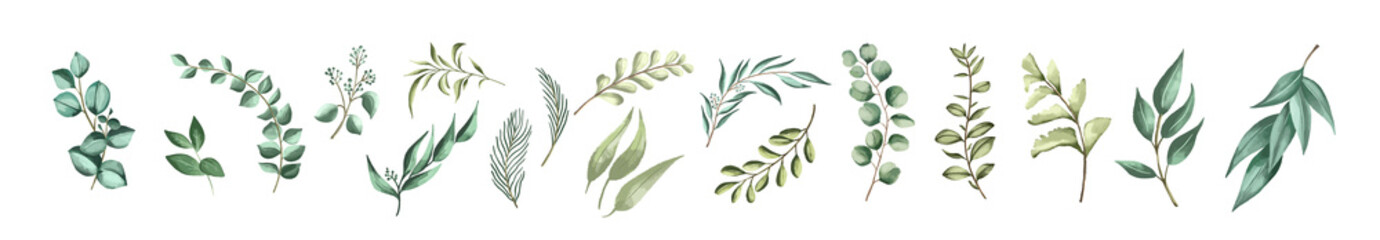 Vector set botanical elements - wildflowers, herbs and wild foliage