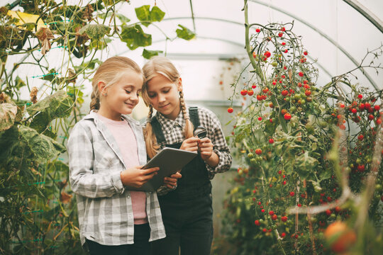 Two beautiful little girls examine small cherry tomatoes through a magnifying glass and write their research on a tablet. Curious children. products