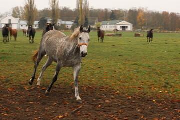 Konie, galop, zwierzęta, stadnina