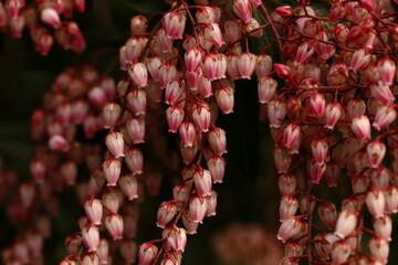 Obraz Kwiaty, wiosna - fototapety do salonu