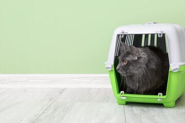 Fototapeta Cute cat in carrier near color wall obraz