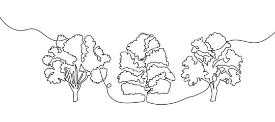 Trees one line set art. Continuous line drawing of plants, herb, tree, wood, nature, flora, poplar, maple, ash tree, linden.