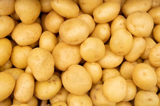 The new harvest white potatoe sold at city farmers market
