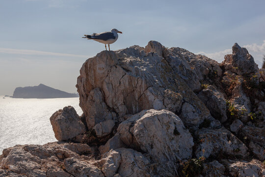 One seagull on the on the rocks of peak Penon de Ifach, Spain.