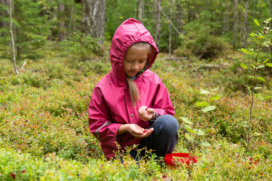 Little caucasian girl is picking wild berries in northern autumn forest