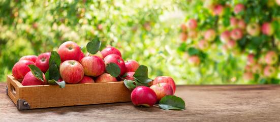 wooden box of fresh apples in a garden