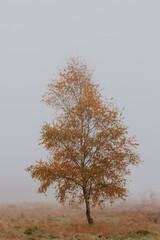 Obraz foggy autumn - fototapety do salonu