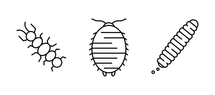 Insect icon set. Centipede, worm and similar reptile icon set. Set for my insect family concept. Linear icons set.