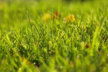 Cudowna zielona trawa w piękny wrześniowy dzień