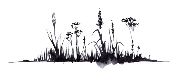 Obraz Hand drawn watercolor illustration. Lower border decorative element. Silhouette dry black stems umbrella plants, small flowers ears of grass. Simple light sketch drawing. Isolated on white background - fototapety do salonu