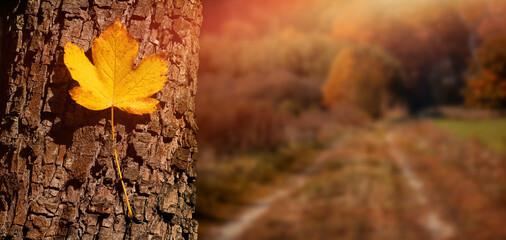 jesień, jesienny liść na tle wiejskiej drogi w kolorach jesieni