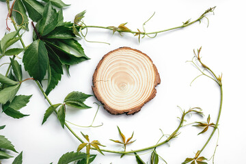Natural round wooden stand for presentation and exhibitions on white background with shadow. Mock up 3d empty podium with green leaves for organic cosmetic product. Copy space. Flat lay, top view.