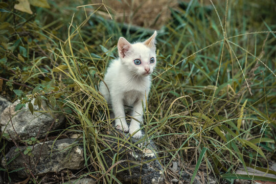 Small cat on a rock surrounded by green plants