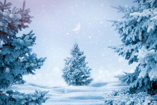 Winter Christmas background. Snowy trees in the city park. Magic fairytale winter.