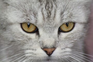 Obraz Katze - fototapety do salonu