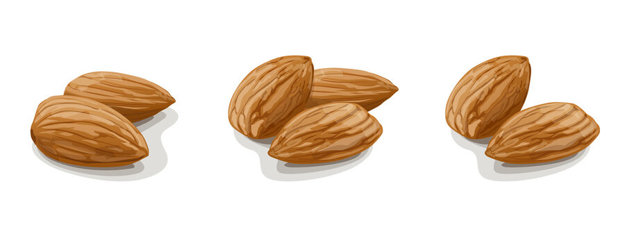 Variants of almonds on white background. Vector Illustration.